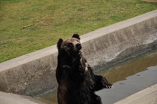 芸達者なクマ