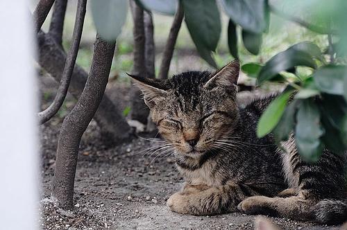 お昼寝ネコ 2