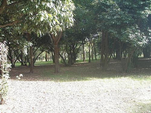 大泉緑地の木漏れ日