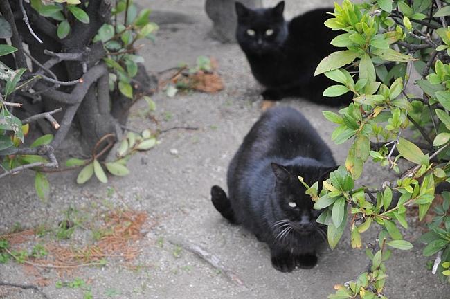近所の猫ちゃん
