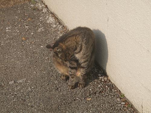 釣り場付近にいたノラ猫ちゃん
