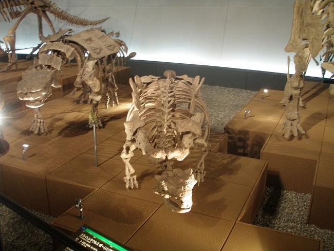 ブラキオザウルスの化石標本