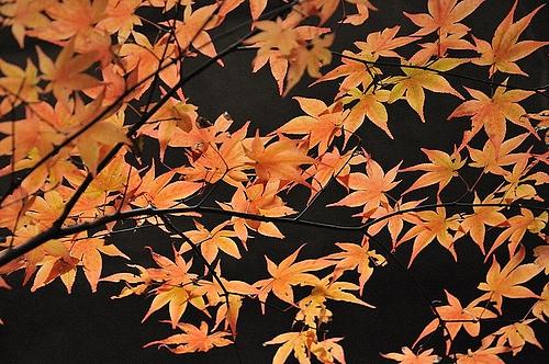犬鳴山 紅葉