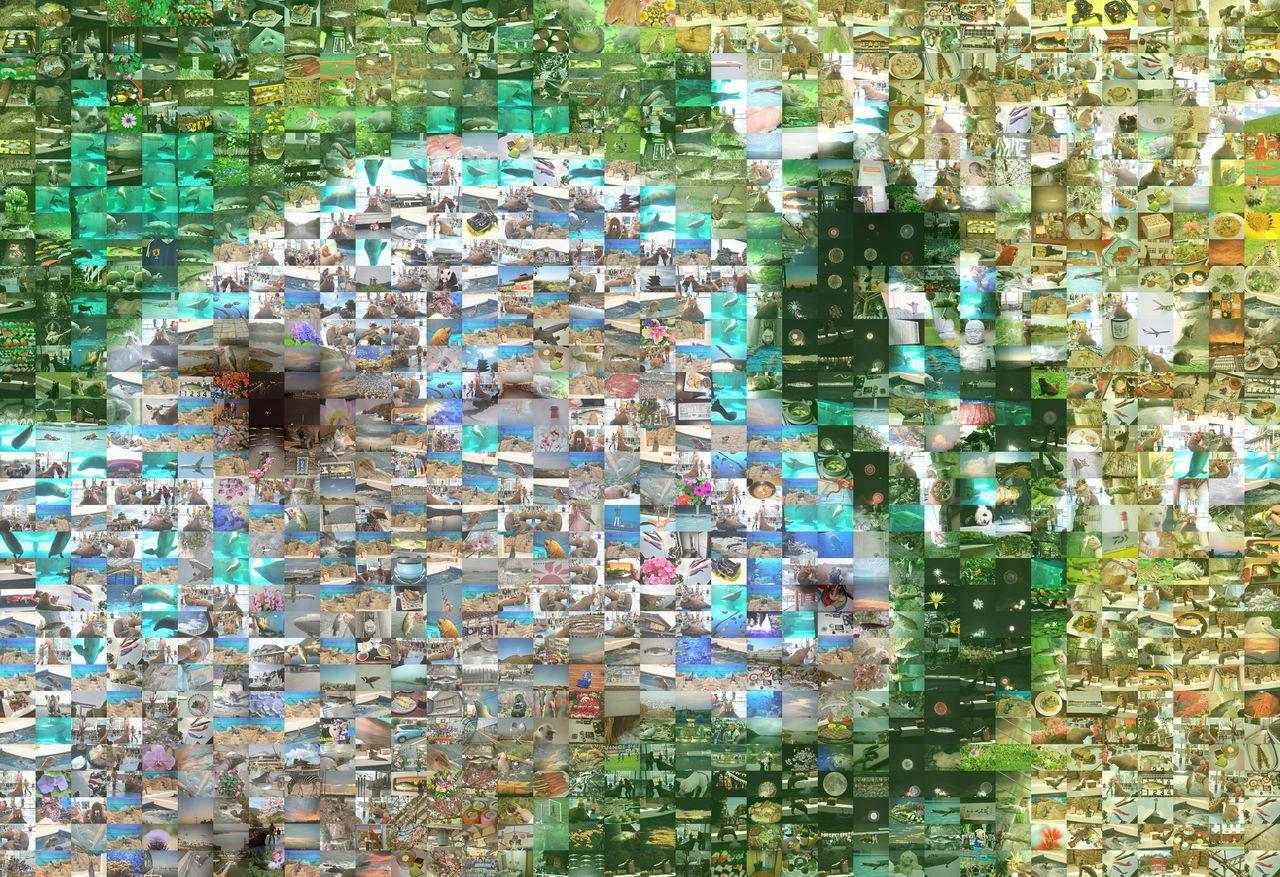 sheep_2 Mosaic12_s2