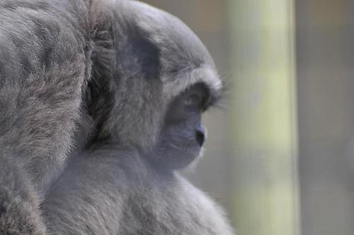 悲しそうな顔のお猿