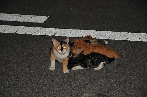 母子猫(おやこねこ)