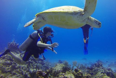 diver-549380_1280