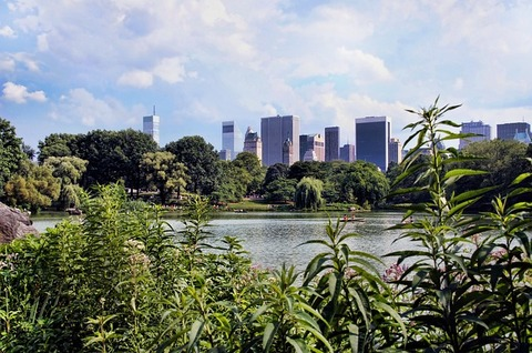 new-york-742786_640