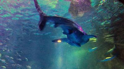 能登半島27のとじま水族館ジンベエザメ1