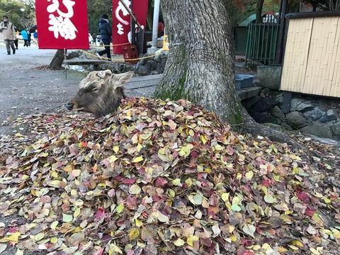 【話題】天才的な発想!奈良県のシカが「枯葉ゴタツ」の開発に無事成功するwwwwwwwww
