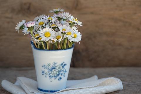 daisy-1346049_640
