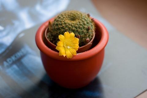 cactus-997594_640