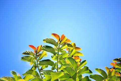 leaves-241701_640