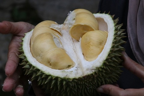 durian-1493310_640