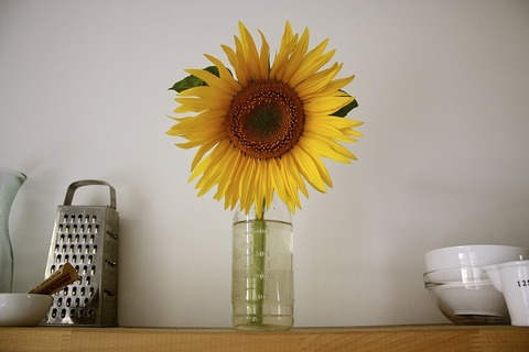 sun-flower-1009119_640