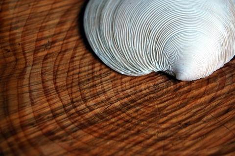 shell-1361911_640_1