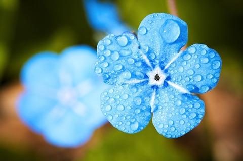 flower-2197679_640