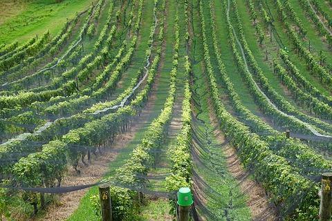 wine-1313751_640