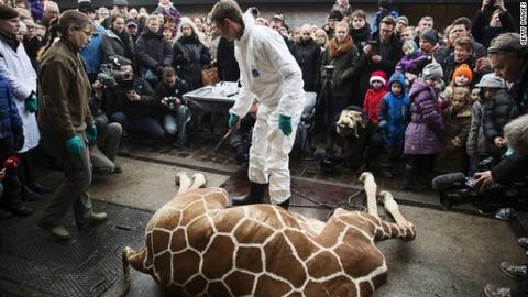 giraffe-marius-shot