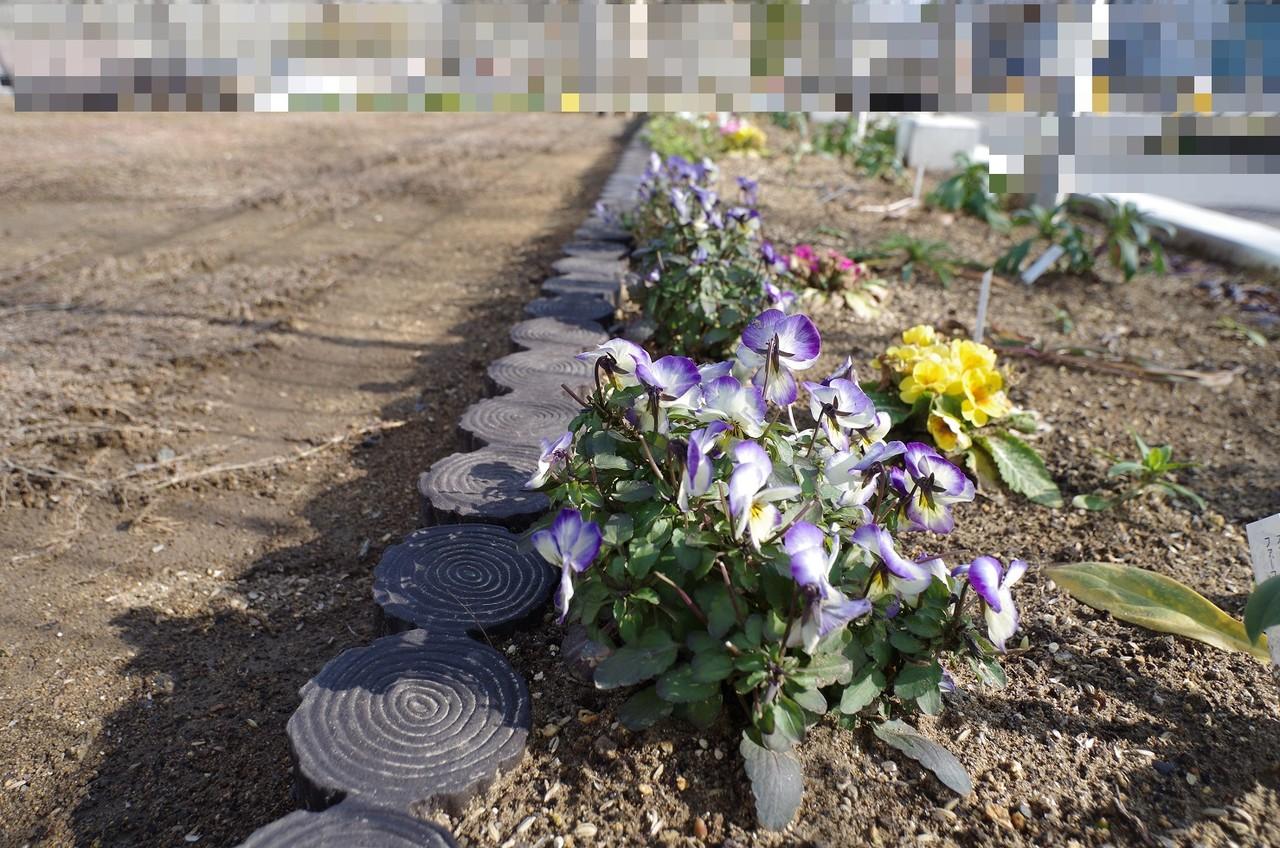 冬枯れ花壇2