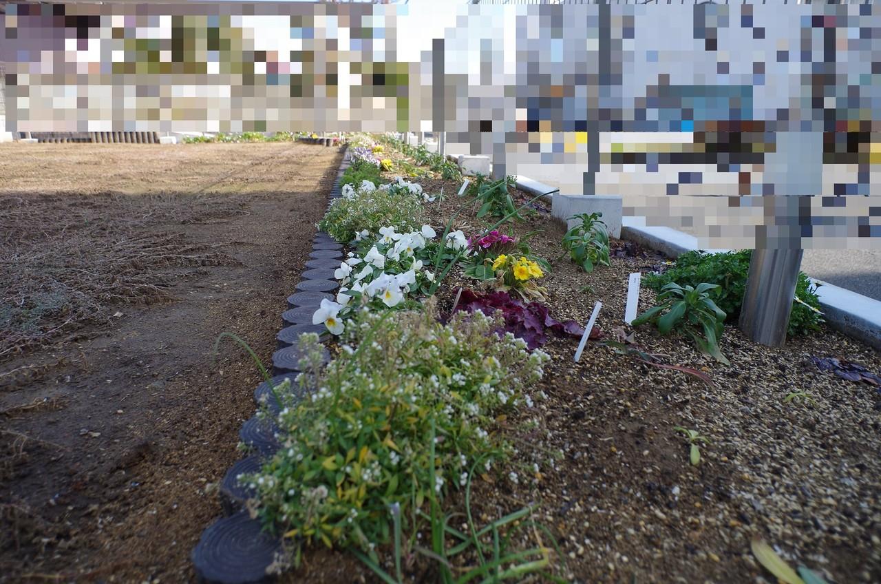 冬枯れ花壇1