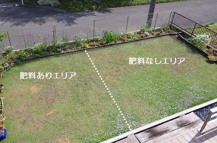 クラピア3年後4_肥料