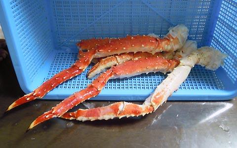 蟹さんの足