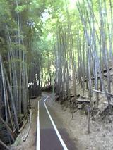 竹林道。これがまた結構坂がキツくて足がぱんぱん