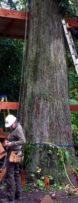 treehouse016.jpg