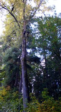 treehouse024