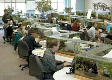 水槽オフィス