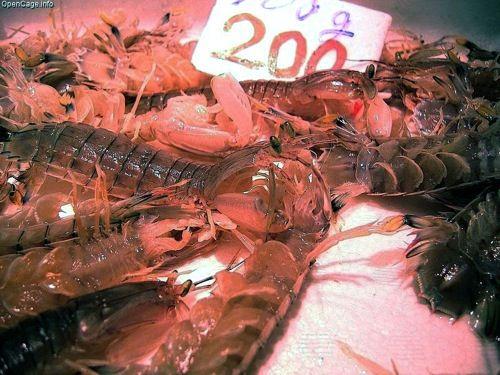 Mantis shrimp 200yen