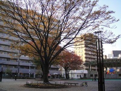 20091123hatopoppo.jpg