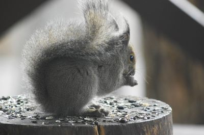 20140428squirrel.jpg