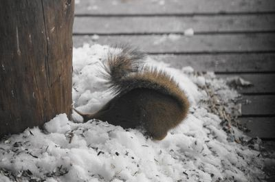 20141224squirrel1.jpg