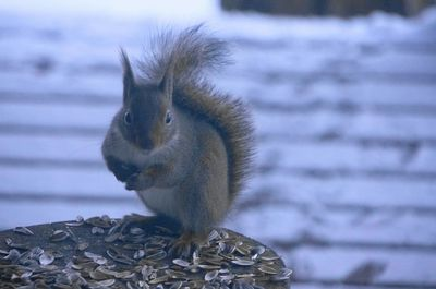 20131223squirrel.jpg