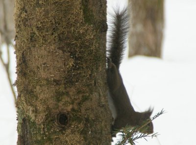 20110224squirrel2.jpg