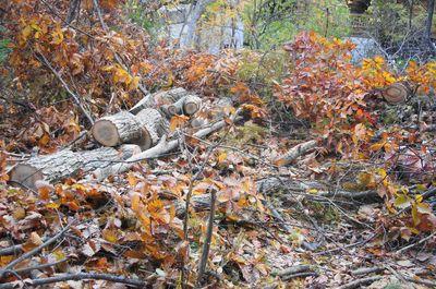 20121031woods1.jpg