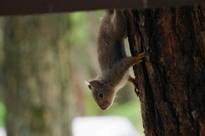 20150627squirrel2.jpg