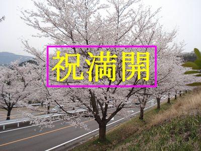 20060411cher.jpg