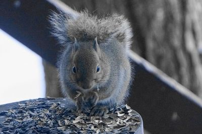 20141223squirrel.jpg