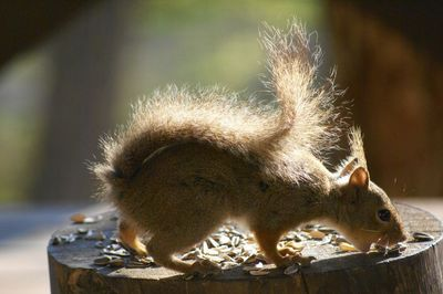 20120522squirrel3.jpg