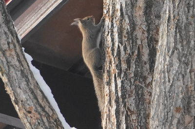 20140219squirrel.JPG
