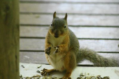 20110824squirrel1.jpg