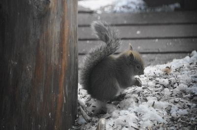 20141224squirrel3.jpg