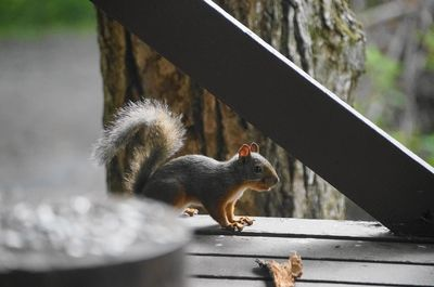 20130723squirrel.jpg