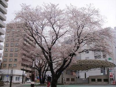 20100329hato.JPG
