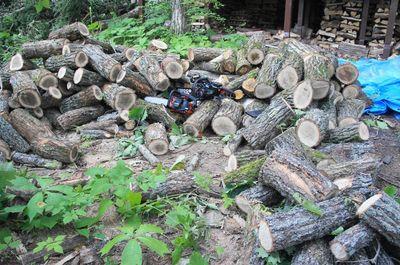 20120727woods.jpg