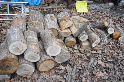 20120424woods.jpg