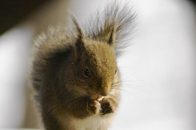 20120220squirrel1.jpg